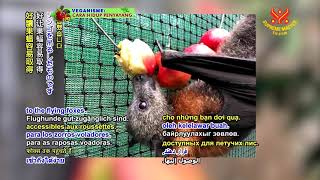0788 NWN 7 Australian animal rescue organization calls for community action to feed flying foxes 6m