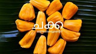 Chakka (Jackfruit) | Mini documentary 2018 | State fruit of Kerala