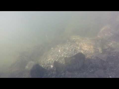 Underwater Delta Footage