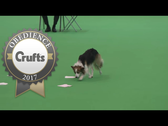 Obedience Championship - Bitches - Scent - Part 1 | Crufts 2017