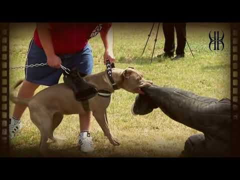 andante-bandog-presentation-(spanish-language)