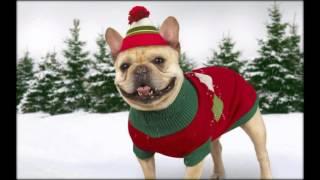 одежда для собак крупных пород купить