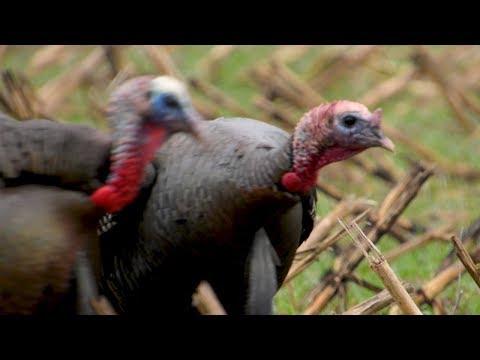 Spring Turkey Hunting - Michigan Turkey Hunting