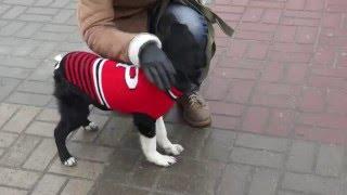 Собака Лада Город Добра Хвост Трубой