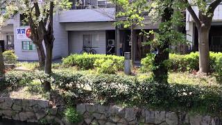【西川緑道公園】ある春の日の風景〜桜吹雪〜