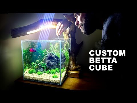 *Betta Fish* Custom Cube Aquarium Setup
