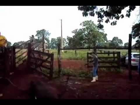 Matando boi com CBC NITRO X 1000 5,5 mm - YouTube