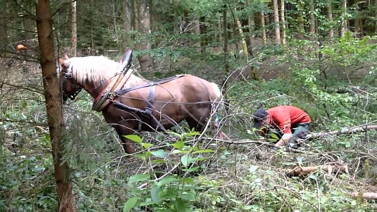 Holzrücken mit Pferd - YouTube