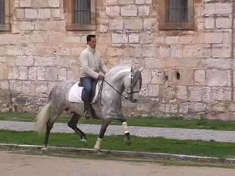 The Original PRE - The Dancing Horse - WWW.HORSESPRE.COM -