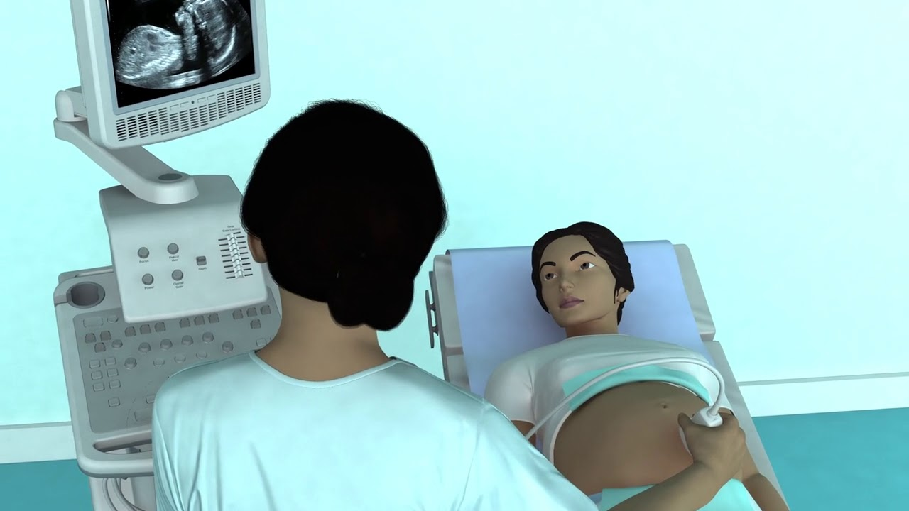 The Basic Steps of an Obstetric Ultrasound Examination