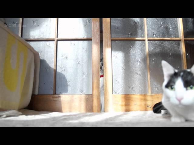 戸を開ける猫 Cats Opening Door 2016#4