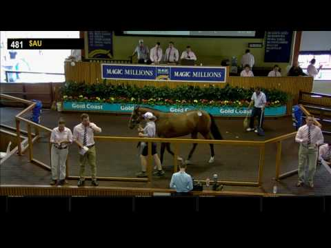 2017 Gold Coast Yearling Sale - Day 3 - Lots 481 to 720