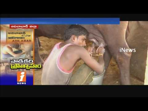 Telangana Govt Plans To Dairy Farming Developments In Adilabad | iNews