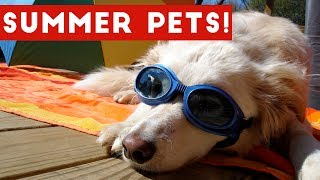Funniest Summer Pets of 2017 Compilation | Funny Pet Videos