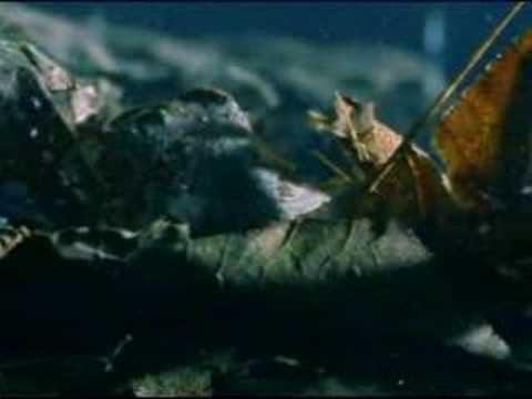 Sanguisuga aggredita da larva di libellula doovi for Divora larve di zanzara