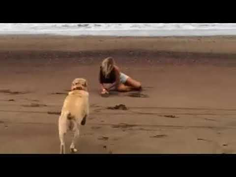Girl Fails Backflip Then Gets Tackled By Dog Youtube
