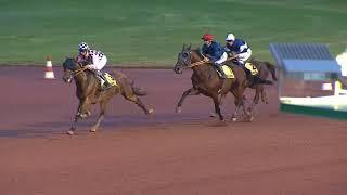 Vidéo de la course PMU PRIX DES JUSQUIAMES