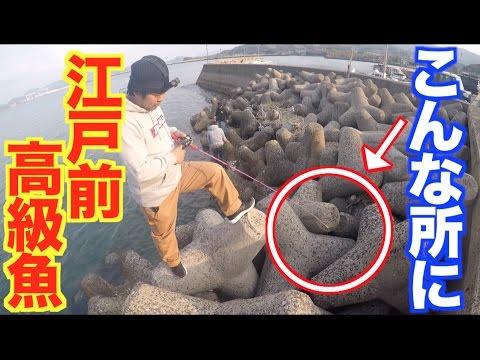 テトラの隙間から江戸前高級魚が次々と!!