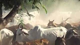 movies and darshan raman bihari 06.4.2011 to 08-04-11 054.MOV