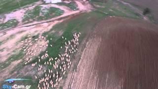 Ιπτάμενος βοσκός / Flying shepherd