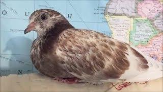 PMV Pigeon Care