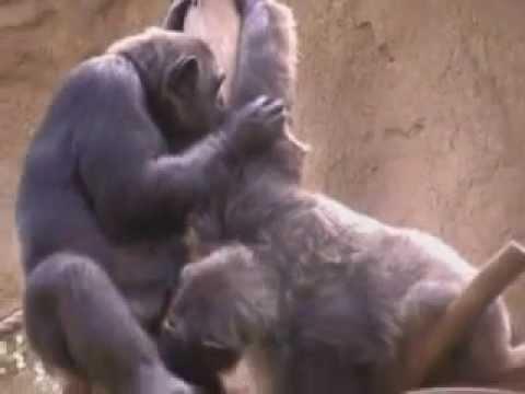 Sexo con monos reno