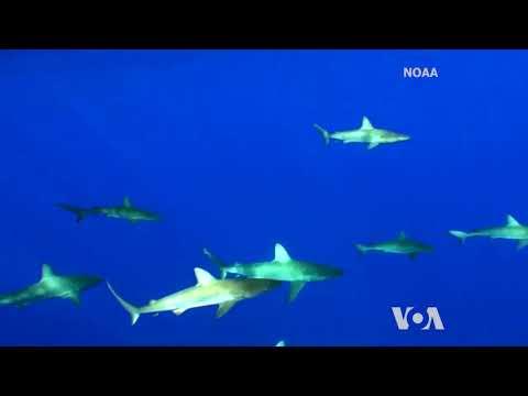 Satellite Technology Helps Protect Ocean Wildlife