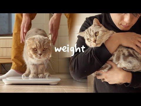 수리노을 고양이 가족+칠냥이 체중계로 몸무게 재보기
