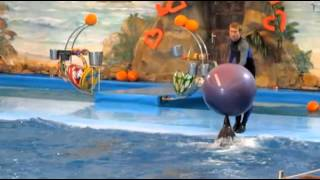 Представление с дельфинами