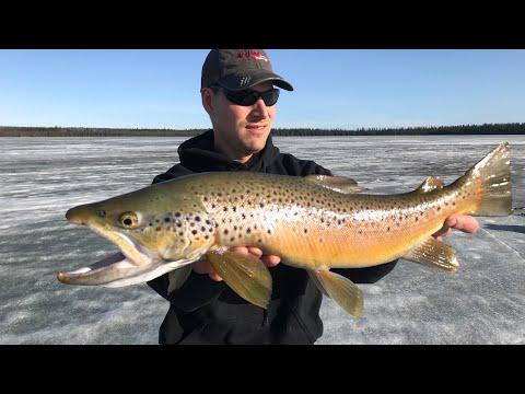 +25 Deg Ice Fishing Big Brown Trout