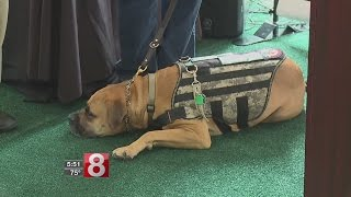 Military Appreciation Day at Travelers Championship Honors Service Dogs