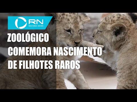 Zoológico comemora nascimento de filhotes raros
