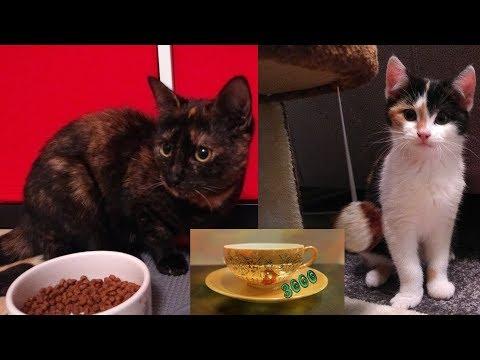 Katzen #01 - Zwei Katzen Ziehen Bei Uns Ein - Tag 1