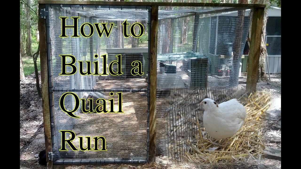 How To Build A Quail Or Chicken Youtube