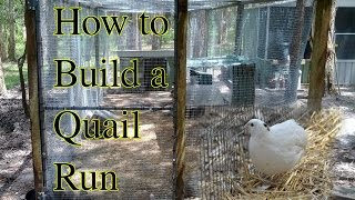 How To Build A Quail Or Chicken Run.mp4