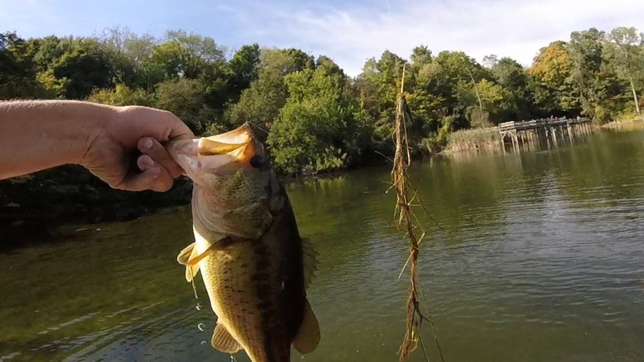 Pond fishing for largemouth bass with senkos youtube for Bass fishing ponds