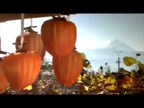 Japanese Persimmon Deodorant | Eliminate Body Odor, Nonenal, Old People Smell