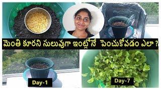 How To Grow Methi At Home  In Telugu| Fenugreek Leaves At Home | Aluminium Foil Hack | Telugu Vlogs