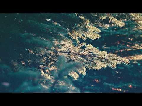Футаж Хвойные ветви Блики и снежинки Праздничный фон для открытки поздравления FOOTAGE