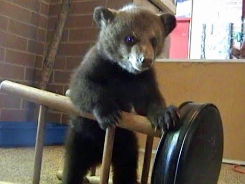 BEAR CUB named Morton