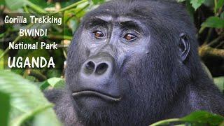 BWINDI Impenetrable National Park - Gorilla Tracking - UGANDA