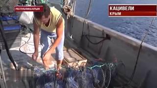 видео Аукцион – участок акватории Черного моря /  Учитесь ловить вместе с нами