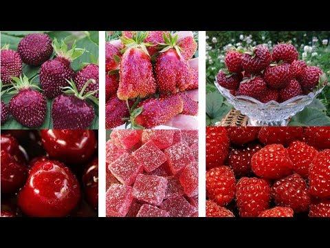 Новая садовая земляника с необычными вкусами | крупноплодная | мускатный | земляника | малинная | клубника | вишневая | шиндлер | садовая | крупная | мускат