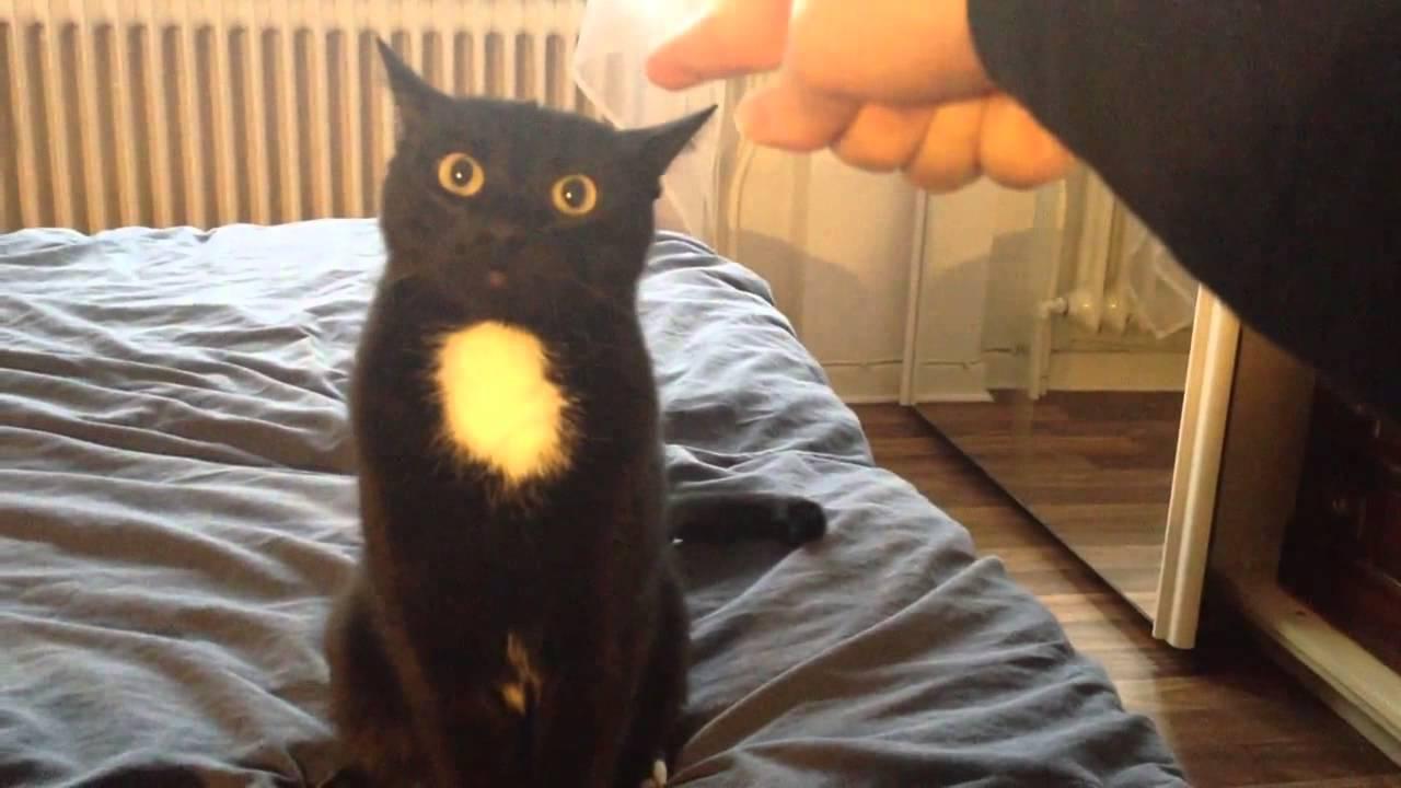 Non tutti i gatti amano le coccole