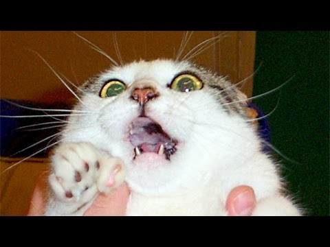Funny Scared Cats Compilation NEW