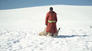 В Монголии второй год подряд массово гибнет скот (новости)
