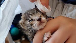 다 죽어가던 새끼고양이 구조 후 처음 병원가서 들은 말…