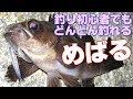 【11月中旬:メバル釣り】釣り初心者でもどんどん釣れる!漁港で手軽に楽しめるメバ…