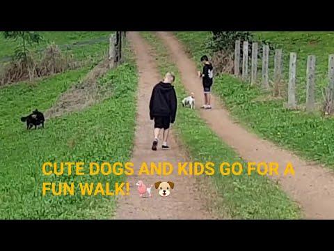 CUTE DOGS BELLA AND BEAU GO FOR A FUN WALK! 🐩🐶💖