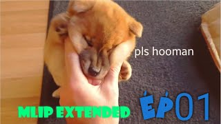 MLIP extended cuts - Ep 01 / Shiba Inu puppies